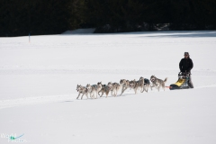 2012 - International Dog Sleigh Race (Les Mosses)